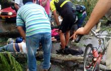 Árboles 'que matan' y sin autoridad que los controle en Montería