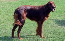 """A partir de los siete años los veterinarios consideran que el perro entra en edad """"geriátrica""""."""