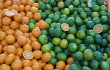 Barranquilla exportará naranjas a EEUU