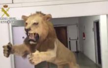 En video   A juicio española que intentó vender en internet un león disecado