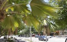 Las Palmas, un barrio seguro pero con problemas ambientales
