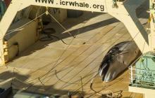 Países que apoyan la caza de ballenas desaprueban crear santuario