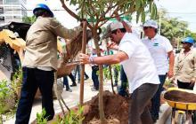 El alcalde Char ayudó a sembrar los árboles.