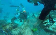 Los arrecifes de corales son uno de los ecosistemas que protege la iniciativa Banco2, en ellos viven diferentes especies marinas.