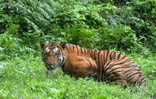China legaliza el comercio de productos a base de tigre y rinoceronte