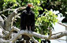 El Caujaral, refugio para más de 120 especies de animales