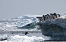 Bloquean plan de santuario marino en la Antártida