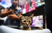 Gran Bretaña prohibirá venta de cachorros y gatos en tiendas de animales