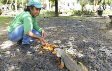 """Maribel, la """"mamá iguana"""" del Parque Santander"""