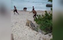 """""""Caimán en el Parque Tayrona es sinónimo de conservación"""": Parques Nacionales"""