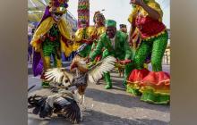 Congos y gallos al son del Joe Arroyo