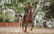 La nueva vida de 'El Príncipe', el caballo más antiguo de la Policía