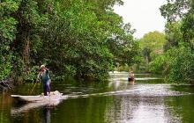 Apple busca proteger los manglares colombianos