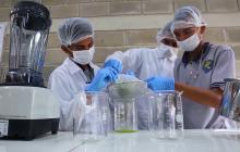 Estudiantes en Polonuevo hacen gel antibacterial con hojas del árbol de matarratón