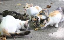 Matanza de cuarenta gatos callejeros investigada por Fiscalía en Marruecos