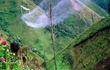 Bajan las hectáreas sembradas de coca en Colombia: EEUU