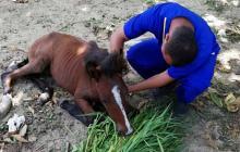 Mebar recupera 36 equinos con señales de maltrato