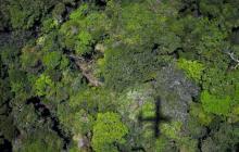 La agroforestación es importante en este punto.