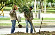 Barranquilla ya cuenta con 56.000 nuevos árboles
