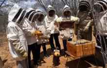 Los wayuu que cazaban abejas hoy producen miel orgánica