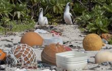 En video | Isla Henderson, un paraíso arruinado por el plástico