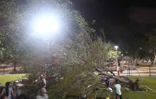 El árbol fue removido de la zona de juegos infantiles.
