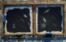 Orcas mientras estaban en pequeños estanques en el distrito Extremo Oriente.