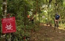 En video   Desminar Colombia, la tarea de los exguerrilleros que sembraron explosivos