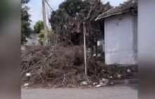 La comunidad del barrio Lucero alerta de tala de árboles