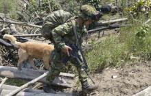 El Ejército adelantando operativos en Nóvita, Chocó.