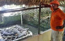 José Gabriel Pacheco lidera la conservación del caimán aguja.