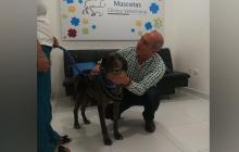 En video | Chéster, el perro atacado a machete en Montería, fue adoptado por una familia