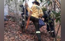 Incendio en la vereda Tigrera, en Santa Marta, arrasa 600 hectáreas de bosque