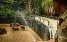 Uno de los empleados de zoológico riega unas de las zonas donde se encuentran  los animales.