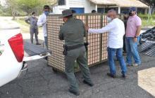 Trasladan especies confinadas en el Zooparque Los Caimanes de Córdoba