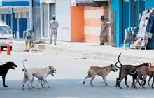 Unos 20.000 perros y gatos que viven en las calles están más desprotegidos eneste momento por la COVID-19, según la Policía Ambiental de Barranquilla.