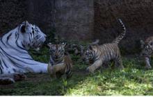 Investigación advierte sobre acelerada extinción de animales vertebrados
