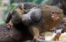 En medio de la cuarentena nacen 17 animales en el Zoológico de Barranquilla