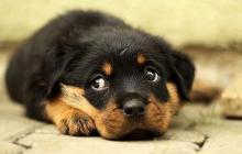 ¿Cómo hacer efectiva una denuncia de abuso animal?