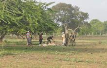 Cuatreros tienen en alerta a ganaderos de Ponedera