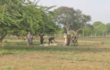 Policía y Ejército atienden casos de robo de ganado o