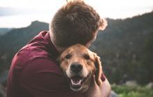 Proteger tu mascota, un acto de amor
