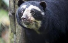 El santuario de osos que resiste a las adversidades de la pandemia
