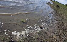 Investigan causas de muerte de peces en Ciénaga de Chilloa, en Magdalena