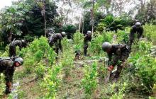 Cultivos de coca en Colombia bajan a 154.000 hectáreas en 2019
