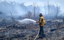Controlan incendio en el Vía Parque Isla Salamanca
