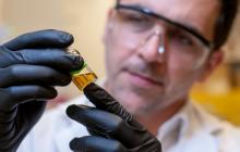 Investigan tratamiento contra COVID-19 a base de cannabis