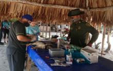 Jornada para alimentar y esterilizar perros y gatos en Barú