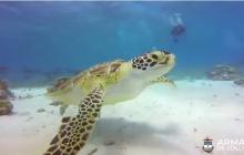 A San Andrés arriban anualmente cuatro especies de tortugas marinas.