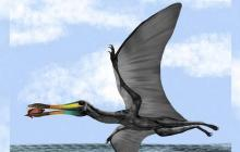 El paleontólogo Edwin Cadena explicó que la criatura vivió hace unos 135 millones de años, medía unos cinco metros cuando extendía sus alas, y se alimentaba principalmente de peces y cangrejos.